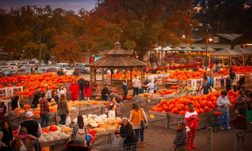 50+ Awesome Fall Events & Festivals in Greater Philadelphia in 2021