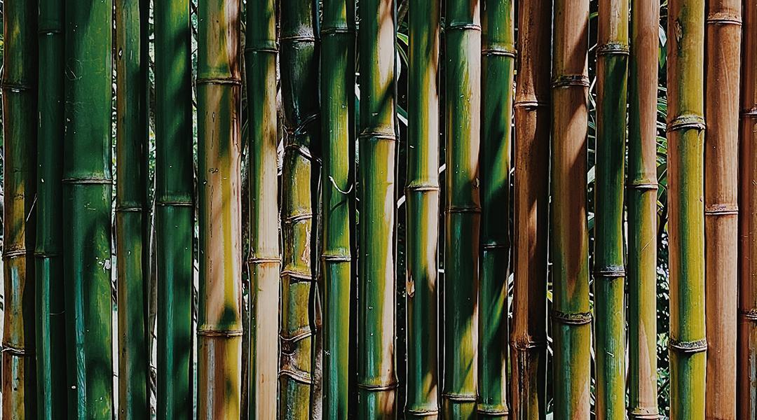 Battery boost found by mimicking the wonders of bamboo