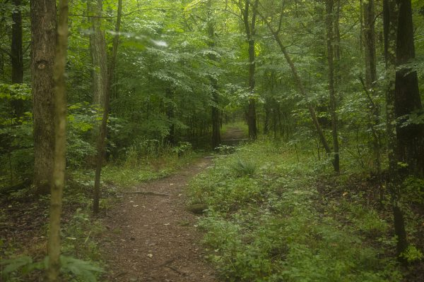 Hoosier National Forest 101: Paw Paw Marsh, Initial Point & Pioneer Mothers Memorial Forest