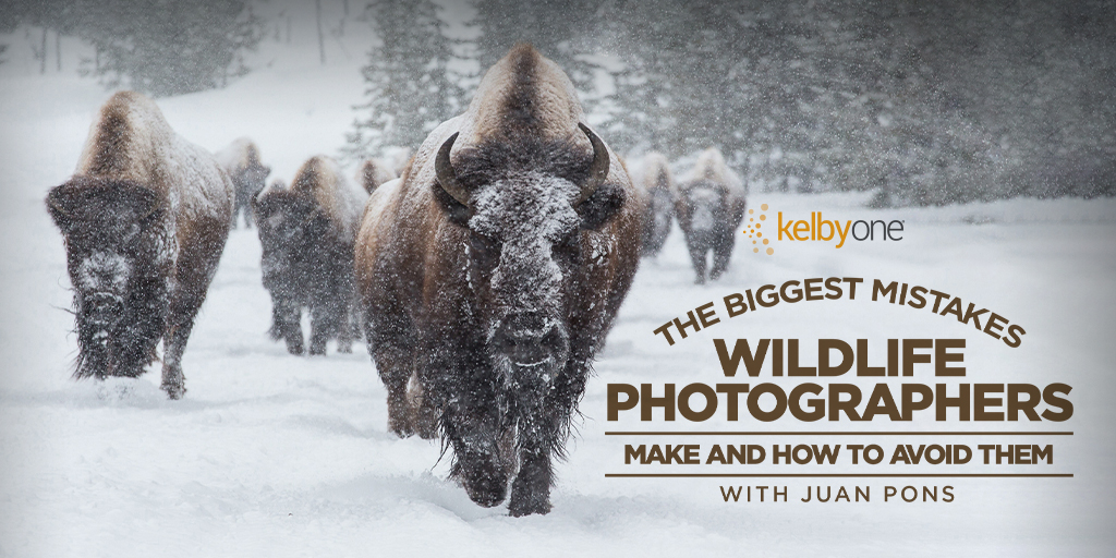 New KelbyOne Course: The Biggest Mistakes Wildlife Photographers Make and How to Avoid Them with Juan Pons