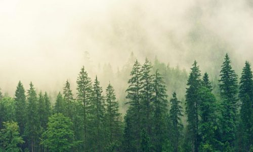Satellites Reveal How Forests Increase Clouds and Cool the Climate