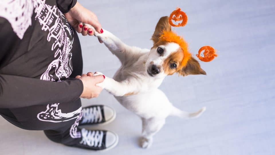 15 Creative Matching Dog and Owner Costumes for Halloween 2021