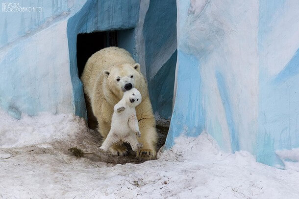25 Cutest Pictures Between Wild Animals And Their Babies