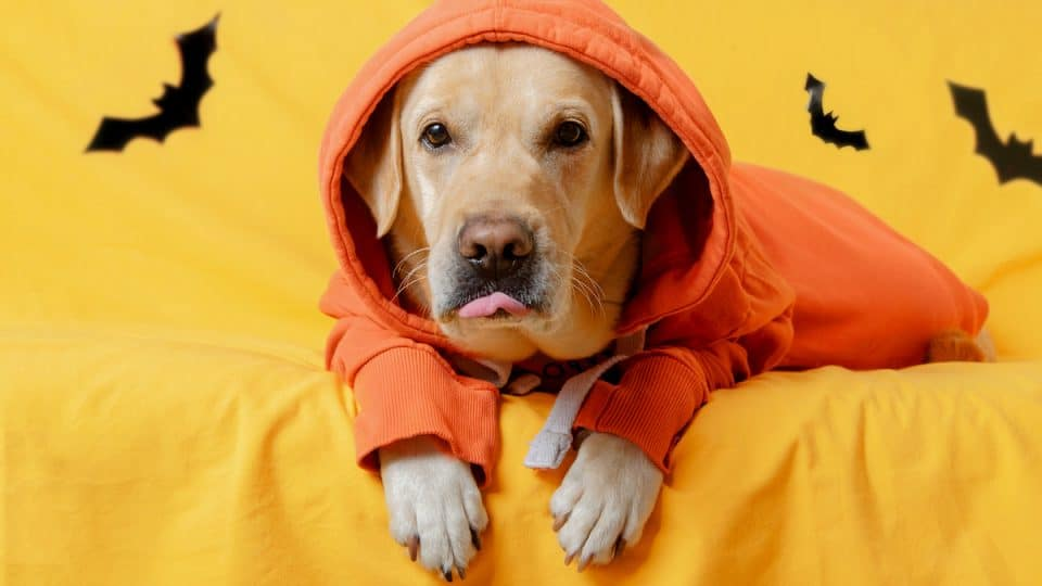 8 Great Dog Halloween Shirts for 2021