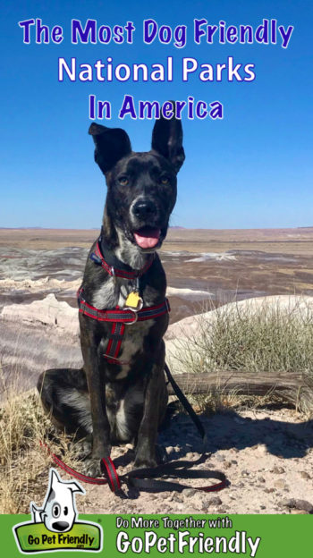 Best Dog Friendly National Parks in America