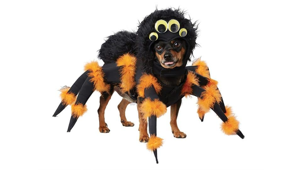 Eek! 10 Creepy-Cute Spider Dog Costumes for 2021