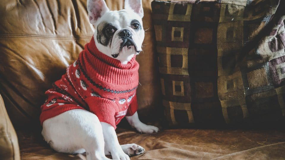 How to Knit (Or Buy) a Sweater for Your Dog