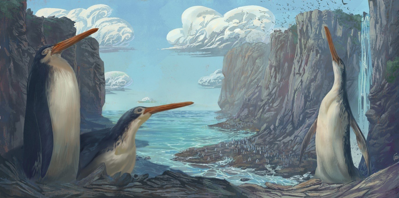 New giant penguin species discovered by NZ schoolkids