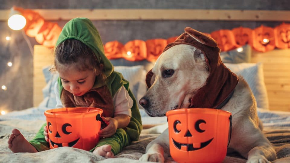 Our 13 Favorite Halloween Treats for Dogs