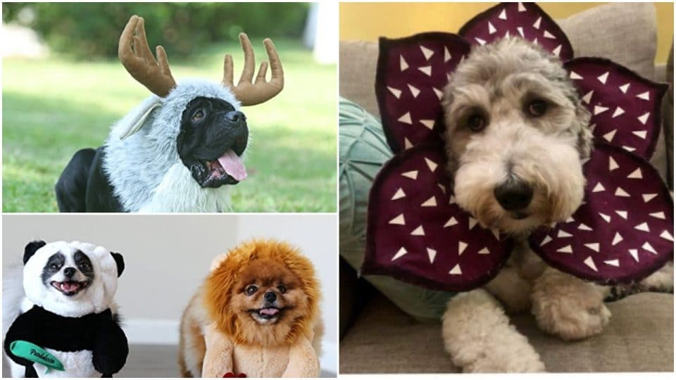 Over 50 Dog Halloween Costumes for 2021: A Guide for Real Dogs and Their People