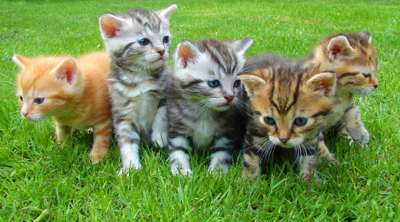Researchers Identify Seven Behavior and Personality Traits in Cats
