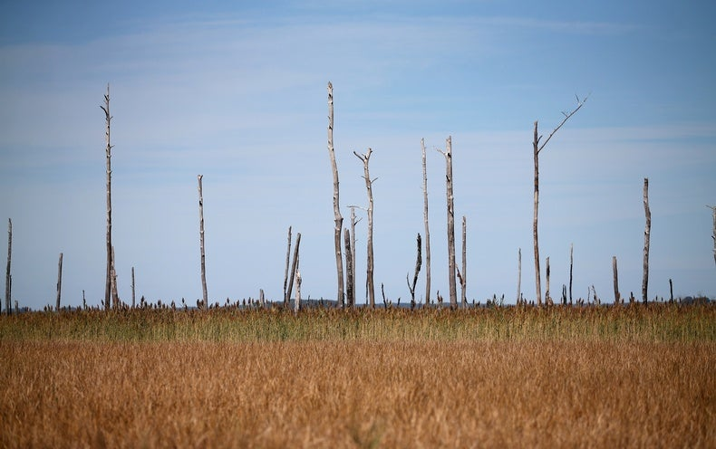 Scientists Flood Forests to Mimic Rising Seas