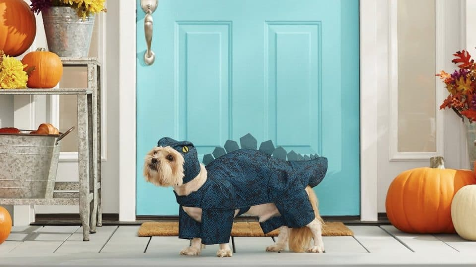 The 15 Best Halloween Costumes for Dogs in 2021 from Chewy
