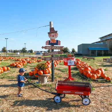 Things to Do this Fall in Frisco