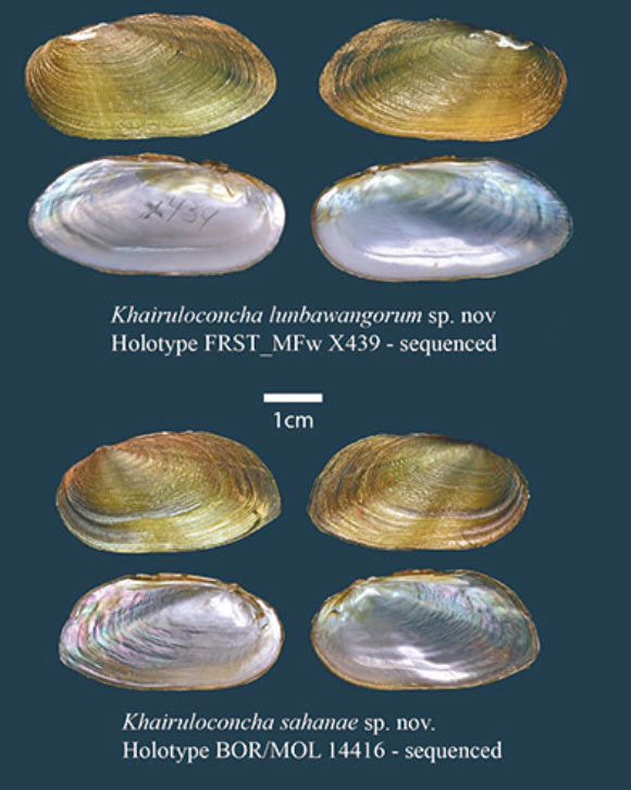 Two New, Rare Freshwater Mussel Species Discovered
