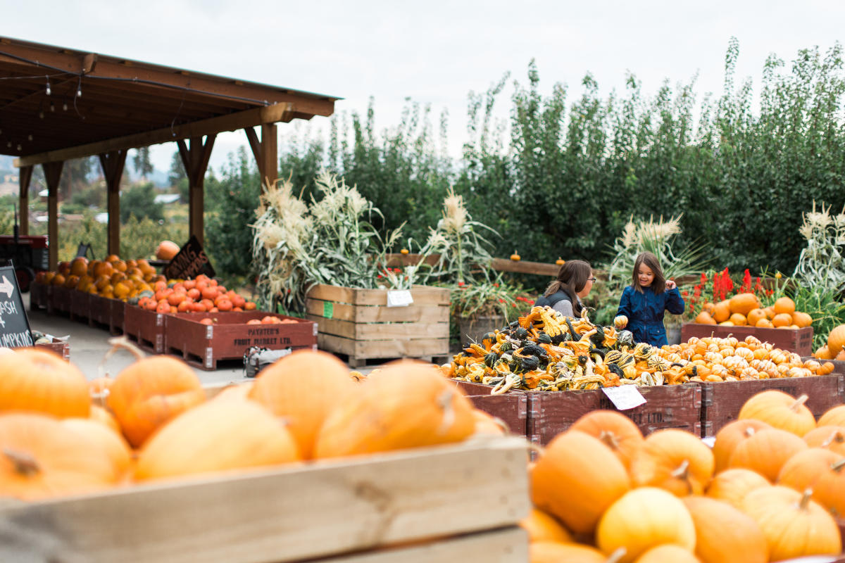 What to do in Kelowna When Friends and Family Visit in the Fall
