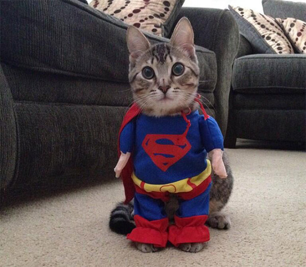 Your Cat Will Love These Cutest Costumes: 30 Adorable Photographs