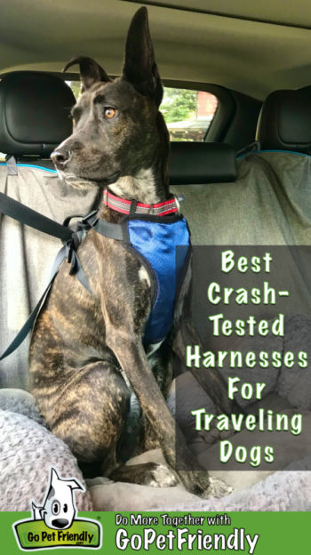 Best Crash-Tested Dog Harnesses For Traveling By Car