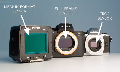 Full-Frame vs Crop Sensor: What's the Difference and Which is Better?
